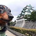 ノエル、名古屋城へ