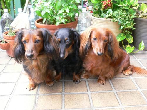 母犬&妹犬と・・・・