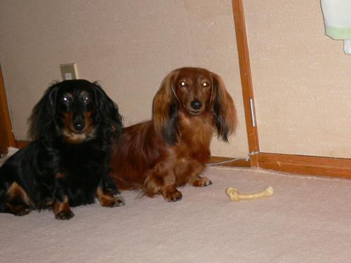 妹犬と大はしゃぎ